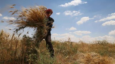Need for seed: Damascus increasingly desperate for wheat